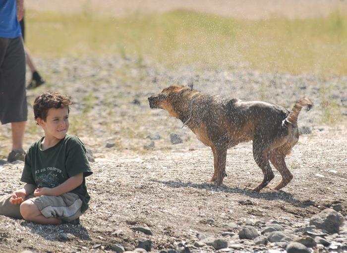 Собачка с мальчегом -2