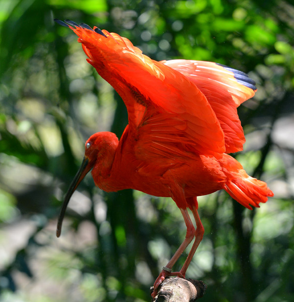 Парк Птиц. Игуасу. Бразилия. Bird Park. Iguacu. Brasil. 16