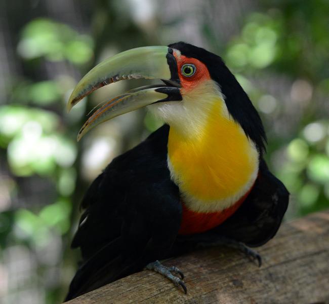Парк Птиц. Игуасу. Бразилия. Bird Park. Iguacu. Brasil. 20