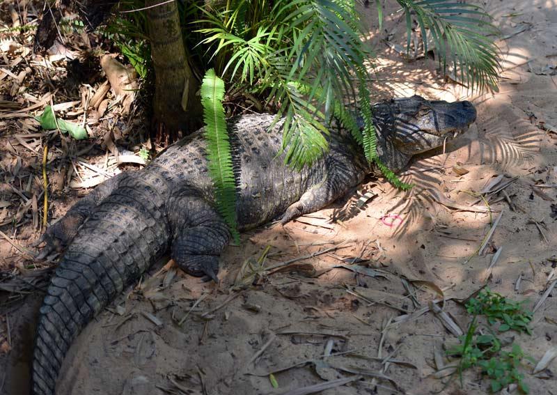 Парк Птиц. Игуасу. Бразилия. Bird Park. Iguaсu. Brasil. 30