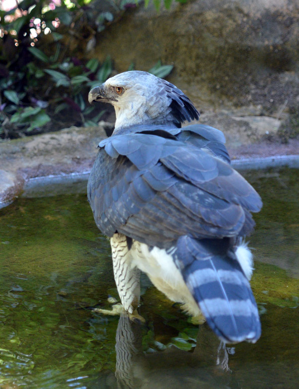 Парк Птиц. Игуасу. Бразилия. Bird Park. Iguacu. Brasil. 14