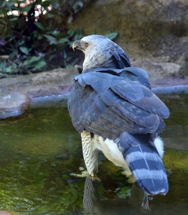 Парк Птиц. Игуасу. Бразилия. Bird Park. Iguaсu. Brasil. 31