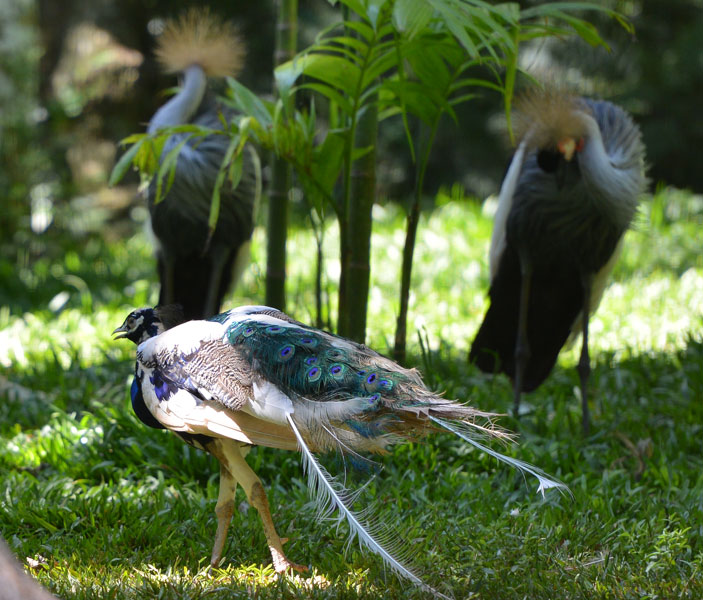 Парк Птиц. Игуасу. Бразилия. Bird Park. Iguaсu. Brasil. 34