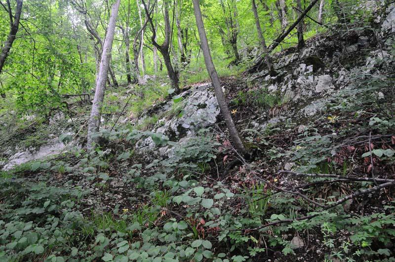 Хорватия Плитвицкие озера. Croatia. Plitvice. 38