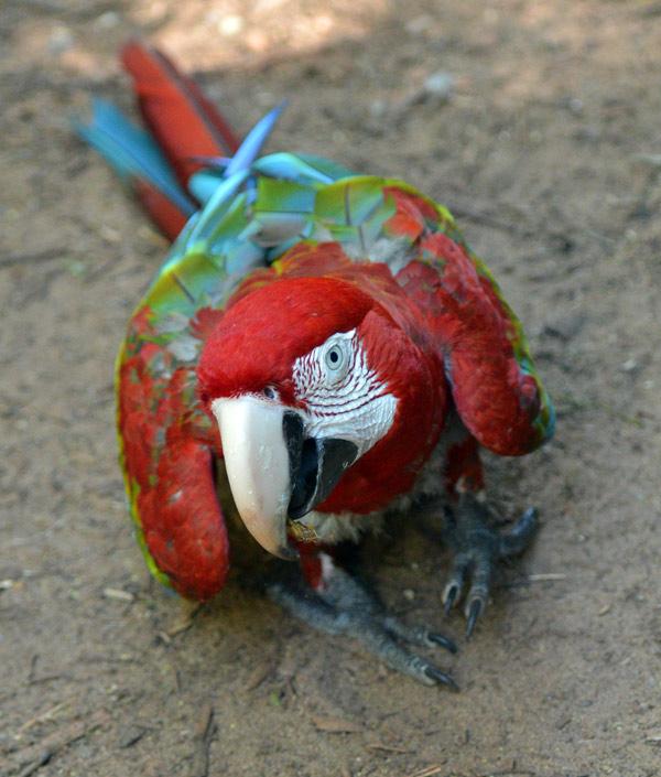 Парк Птиц. Игуасу. Бразилия. Bird Park. Iguaсu. Brasil. 41