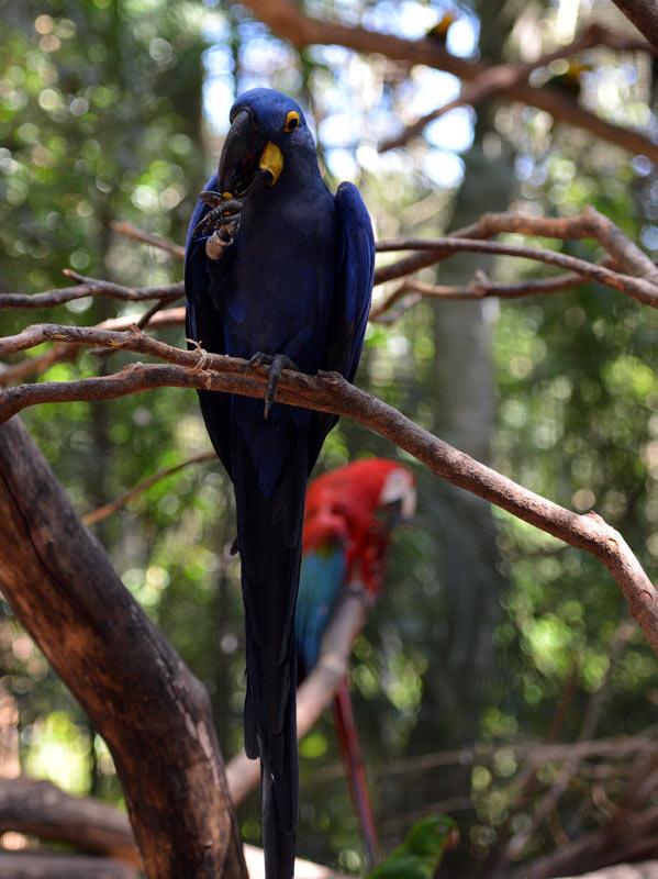 Парк Птиц. Игуасу. Бразилия. Bird Park. Iguaсu. Brasil. 46