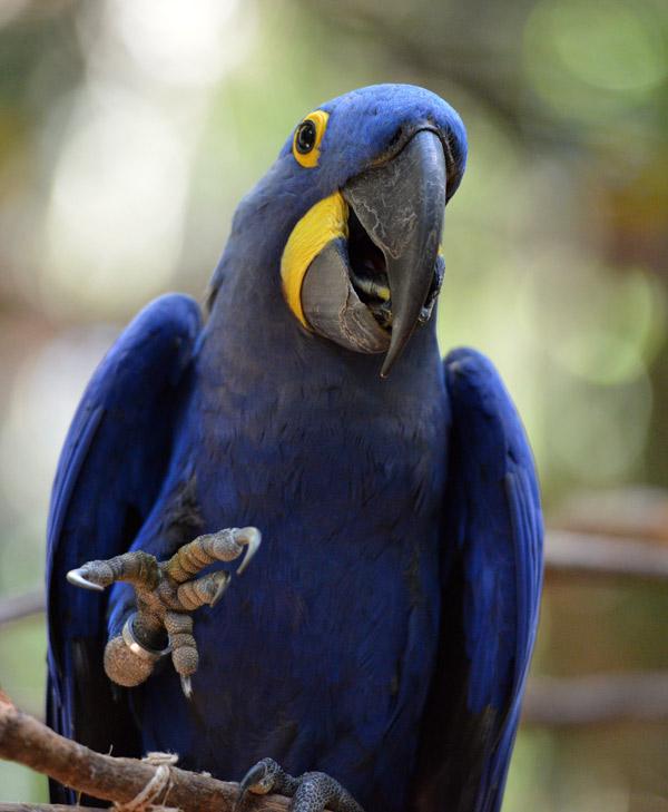 Парк Птиц. Игуасу. Бразилия. Bird Park. Iguaсu. Brasil. 50