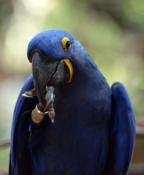 Парк Птиц. Игуасу. Бразилия. Bird Park. Iguaсu. Brasil. 51