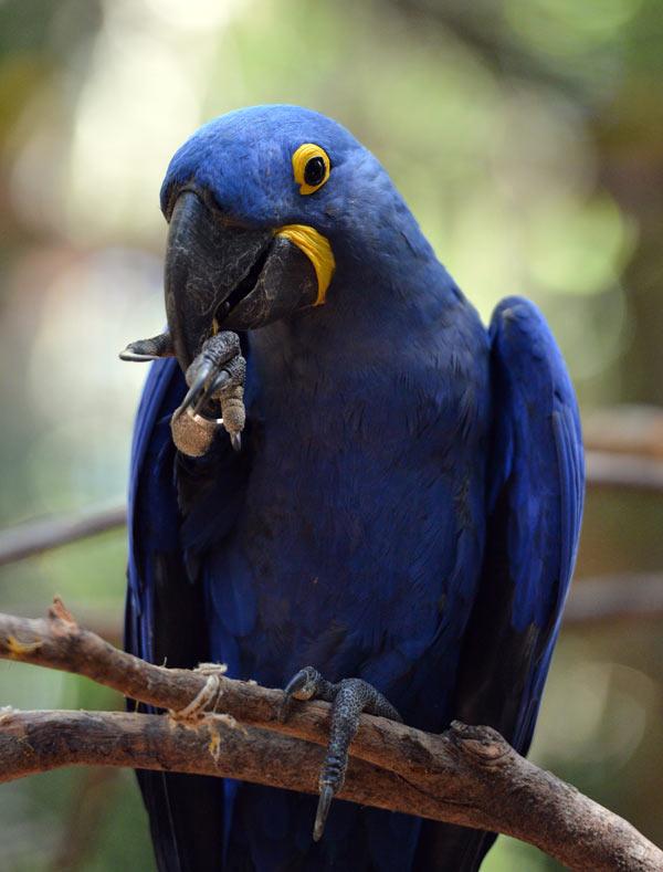 Парк Птиц. Игуасу. Бразилия. Bird Park. Iguaсu. Brasil. 53
