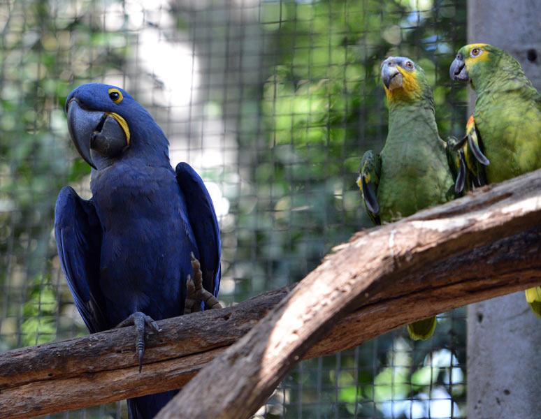 Парк Птиц. Игуасу. Бразилия. Bird Park. Iguaсu. Brasil. 54