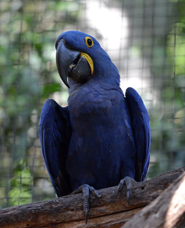 Парк Птиц. Игуасу. Бразилия. Bird Park. Iguaсu. Brasil. 55