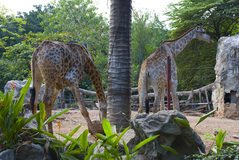 Бангкок. Зоопарк. Bangkok. ZOO.