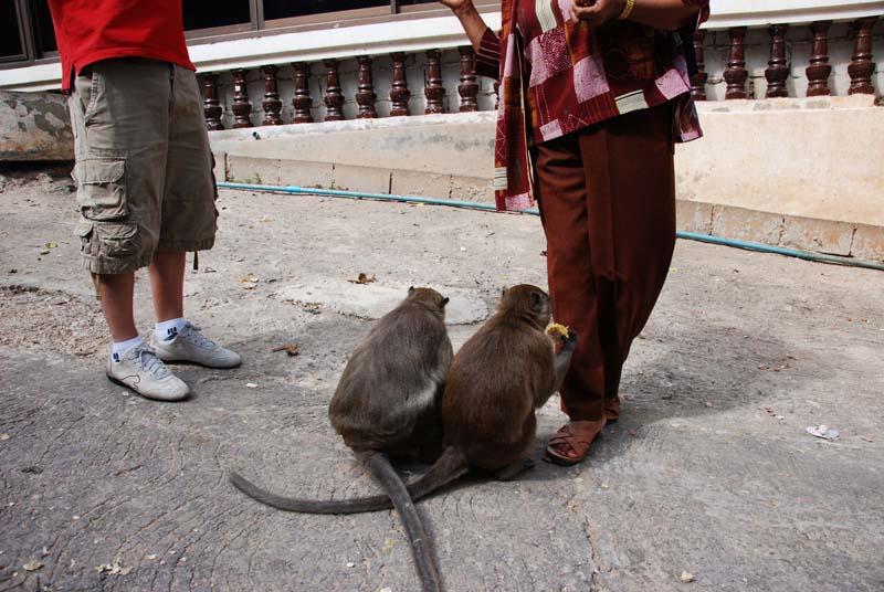 Хуа Хин. Обезьяны. Hua Hin. Monkeys. 14.