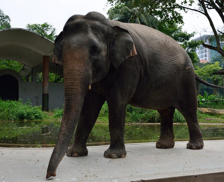 Зу Негара. Куала-Лумпур. Слон. 4