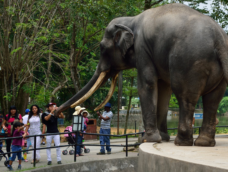 Зу Негара. Куала-Лумпур. Слон. 7