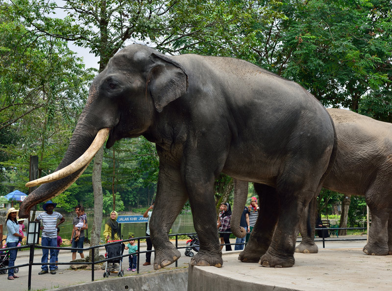 Зу Негара. Куала-Лумпур. Слон. 11
