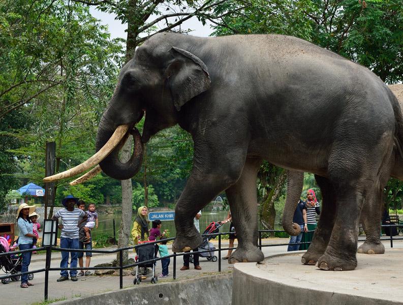 Зу Негара. Куала-Лумпур. Слон. 12