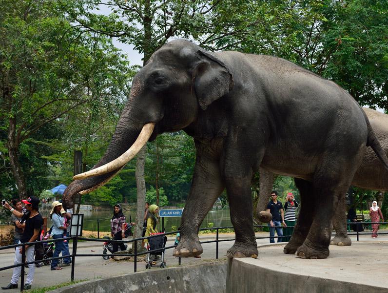 Зу Негара. Куала-Лумпур. Слон. 13