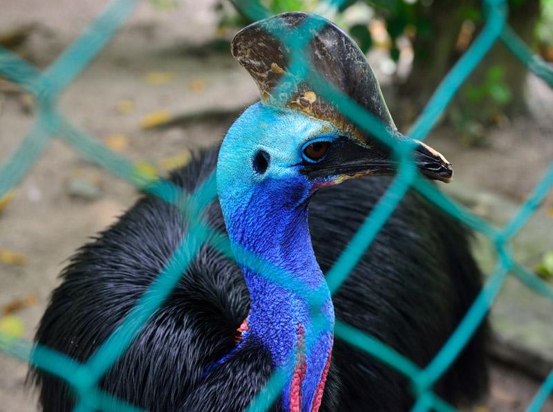 Зоопарк в Куала-Лумпуре. 19