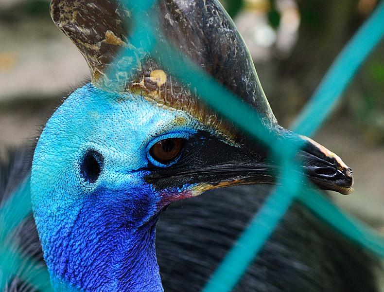 Зоопарк в Куала-Лумпуре. 20