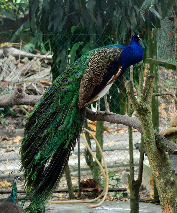 Зоопарк в Куала-Лумпуре. 22
