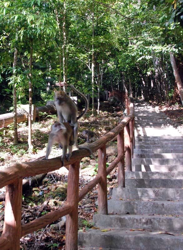 Лангкави. Водопады. Обезьяны. Langkawi. Waterfall. Monkey.