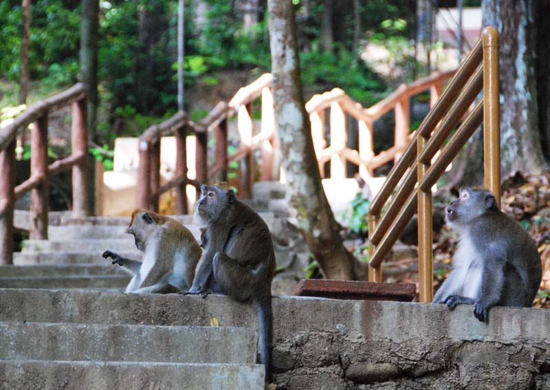 Лангкави. Водопады. Обезьяны. Langkawi. Waterfall. Monkeys.