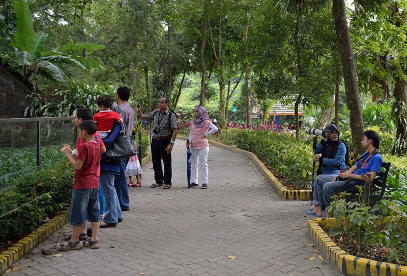 Зоопарк в Куала-Лумпуре. 23