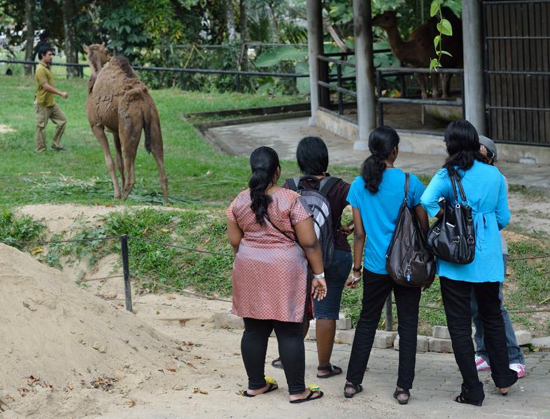 Зоопарк в Куала-Лумпуре. 63
