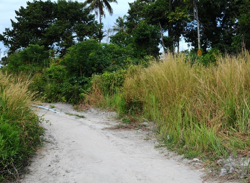 Ко Липе. Прогулка по острову. Ko Lipe. 195