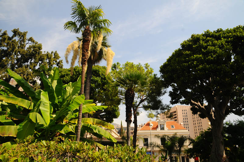 Монако. Парк перед казино. Monaco. Фото 23.