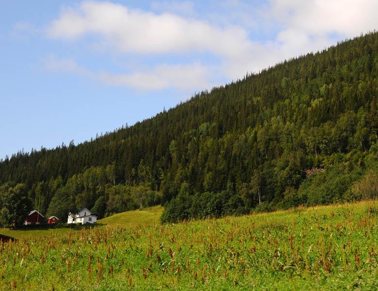 Остерсунд - Трондхейм. Е14. (c)Smyslik 50