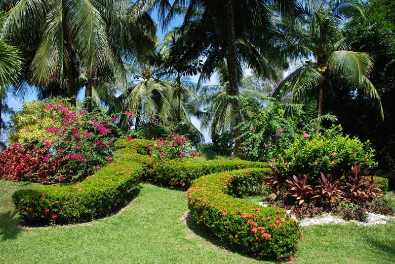 Пенанг. Пальмы и цветы. Penang. Palms and Flowers.