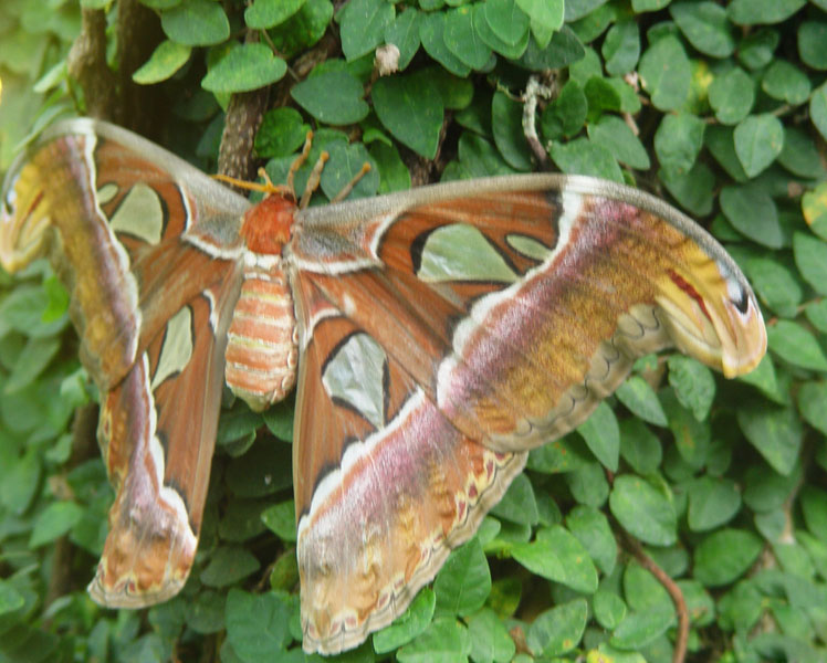 Пенанг. Бабочка. Penang. Butterfly.