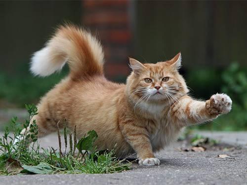 Cat 6